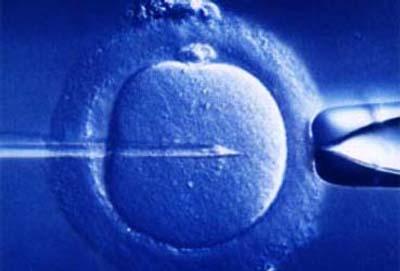 impianto-embrione